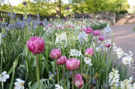 beplantingsplan Gooi bloemen bollen