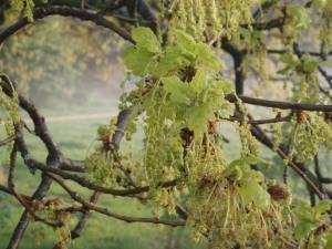 tuinbomen tuinadvies Gooi