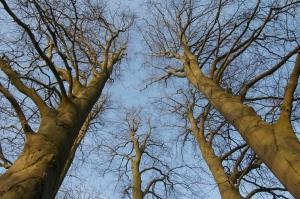 bomen in de tuin