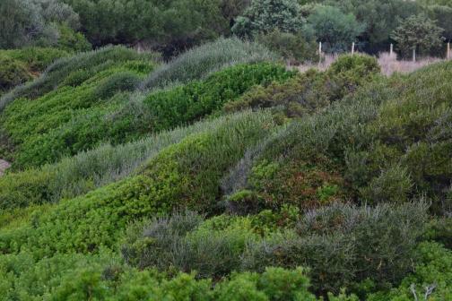 tuinontwerp beplanting Bussum