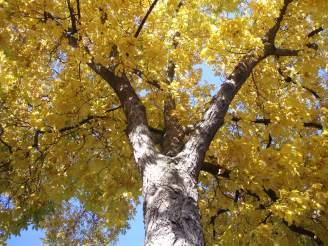 bomen kopen park boom