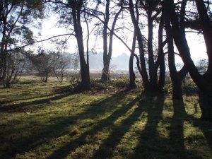 beplantingsplan tuinontwerp Bussum
