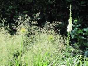 beplantingsplan Blaricum