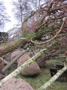 boomkwekerij hovenier bomen kopen