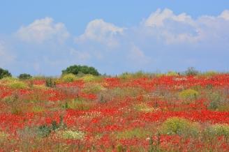 beplanting tuinontwerp Bussum Laren Naarden