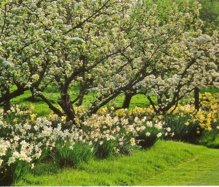 landelijke tuin romantisch