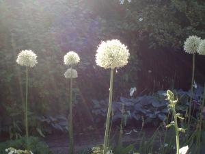 beplantingsadvies planten Naarden
