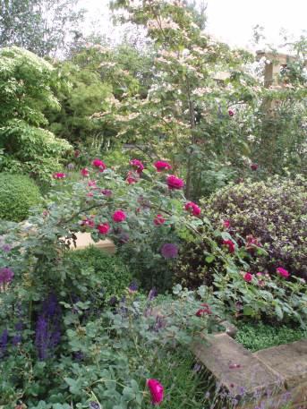 beplanting tuinontwerp Gooi